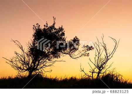 強風に耐えて夕に日浮かぶ樹木たち 68823125