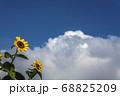 山のような白い雲と二輪のひまわり 68825209