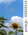 青い空と白い雲とひまわり一輪 68826019