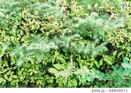 ナチュラルグリーン、森の中のガーデンをイメージした背景素材 68840071