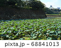 石垣の残る北の丸公園・清水濠と日本武道館 68841013
