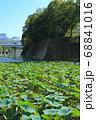 北の丸公園・清水濠と蓮の群生 68841016