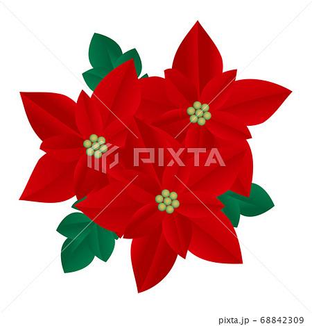 ポインセチア 花のイラスト 68842309