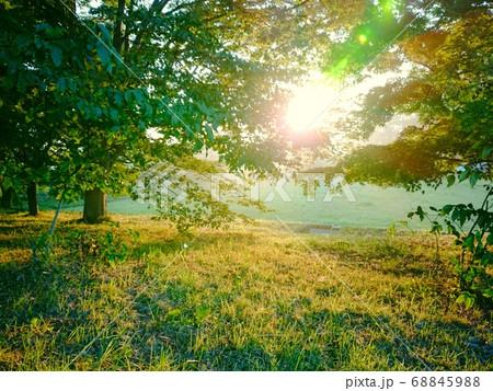 秩父の美の山公園の朝日に照らされた木 68845988