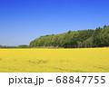 北海道安平町の菜の花畑と雪山 68847755