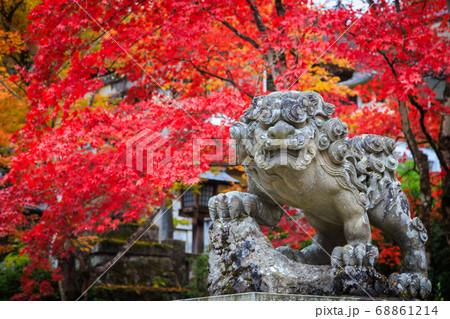 鮮やかな紅葉と狛犬の像 68861214