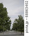 公園内の並木 68863402