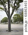 公園内の木 68863403