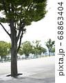 公園内の木 68863404