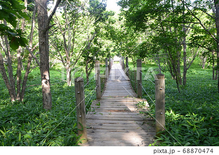 森の中の遊歩道(釧路湿原展望台/北海道釧路市北斗) 68870474
