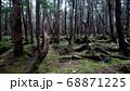 八ヶ岳の白駒の森 68871225
