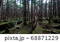 八ヶ岳の白駒の森 68871229