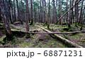 八ヶ岳の白駒の森 68871231