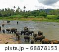 スリランカの象の孤児院名物の象の水浴び風景 68878153