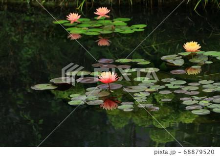 西武池袋屋上庭園「食と緑の空中庭園」睡蓮の庭 68879520