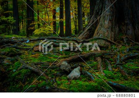 静かな秋の森の根 68880801