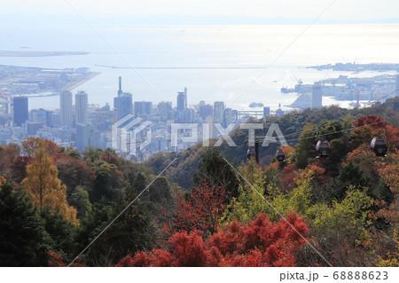 神戸布引ハーブ園の紅葉とハーブ園からの神戸の街並み 68888623