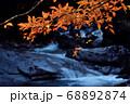 秋の西沢渓谷 68892874