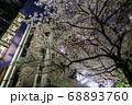 東京大学 ソメイヨシノ 桜 夜景 キャンパス 68893760