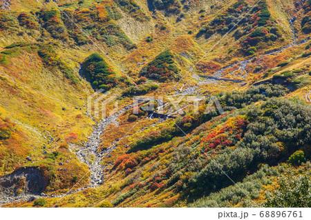 初秋の立山黒部アルペンルート71 紅葉の室堂平 68896761