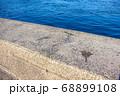 防波堤に付いたイカの墨 68899108