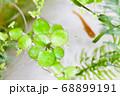 水槽の中の水草とメダカ 68899191