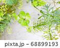 水槽の中の水草とメダカ 68899193