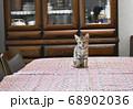 食卓の上に乗ってしまったキジトラの仔猫 68902036