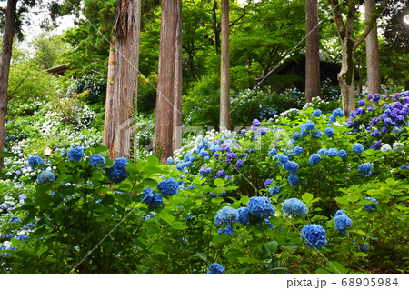 茨城県桜川市 雨引観音 坂東観音霊場第二十四番札所 68905984