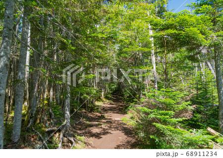 丸山から麦草峠へ向かう登山道(八ヶ岳) 68911234