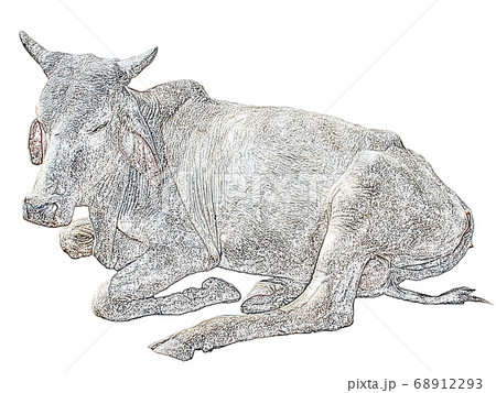 憩うインドの聖牛 瘤ウシ(鉛筆画風) 68912293