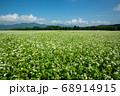 猿楽台地の蕎麦畑 68914915