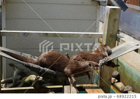 コツメカワウソの可愛いお昼寝タイム~「日立市かみね動物園」の動物たち大集合 68922215