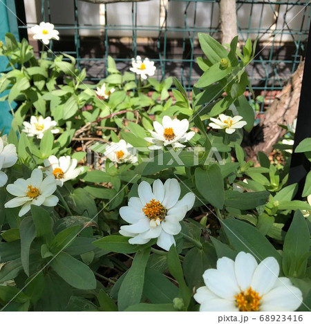 米沢駅で端っこでたくましく咲く花 68923416