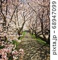 永遠に続く桜並木 68947099