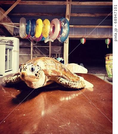海の家を彩るカラフルな浮き輪と可愛い瞳の亀 68947101