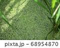 水田の水草 68954870