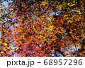 秋晴れの下できらめく紅葉 68957296