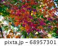 紅葉のグラデーション 68957301
