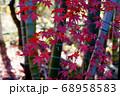 紅葉と竹 68958583