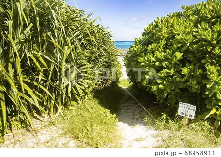 ヨロン島 トゥマイビーチへ続く小道 68958911