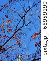 紅葉 冬の気配 68959190