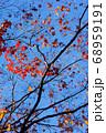 紅葉 冬の気配 68959191