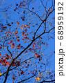 紅葉 冬の気配 68959192