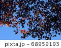 青空に映した紅葉のアウトライン 68959193
