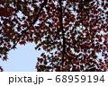 空に映した紅葉のアウトライン 68959194