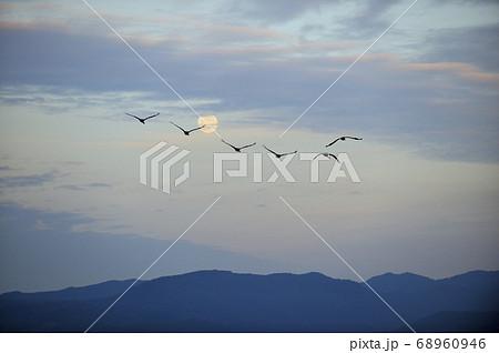 満月とナベヅルの群(鹿児島県・出水市) 68960946