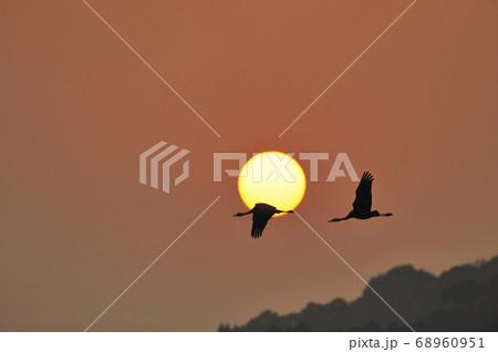 夕日を横切って飛ぶツル(鹿児島県・出水市) 68960951