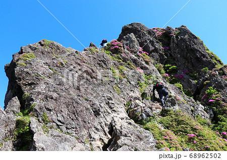 ミヤマキリシマが咲き誇る由布岳、お鉢巡り 68962502