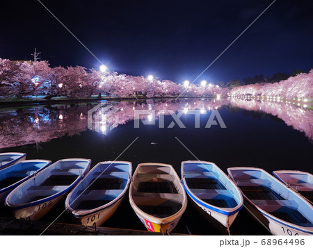 弘前公園西堀の満開の桜とボート 夜桜 68964496